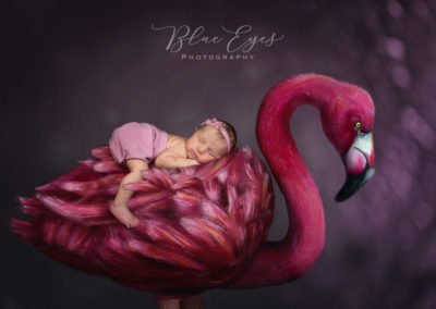 newborn Flamingo copie